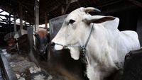 Permalink to Setelah 14 Tahun, China Akhirnya Impor Daging Sapi dari AS
