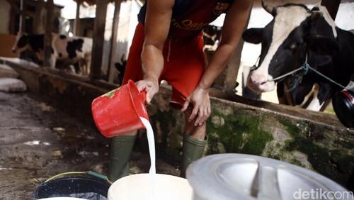 RI Banyak Impor Susu dan Mentega, Ini Nilai dan Negara Asalnya