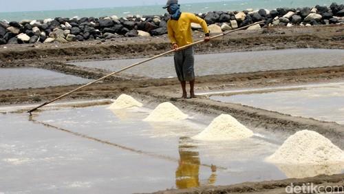 Produksi Garam Terancam Turun Karena La Nina