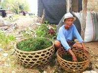 Menengok Aktivitas Petani Rumput Laut di Bali