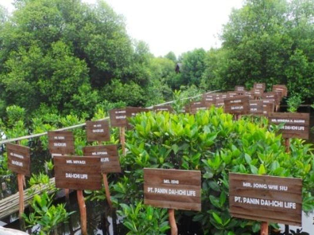 Lebatnya Hutan Mangrove di Jakarta Berawal Dari Sini