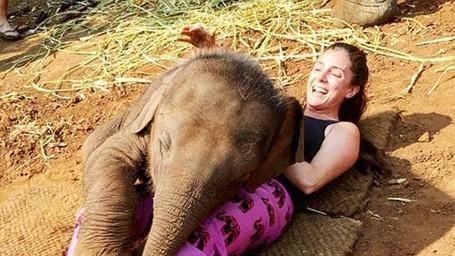 Bertemu Gajah Yang Senang Peluk Turis Di Chiang Mai