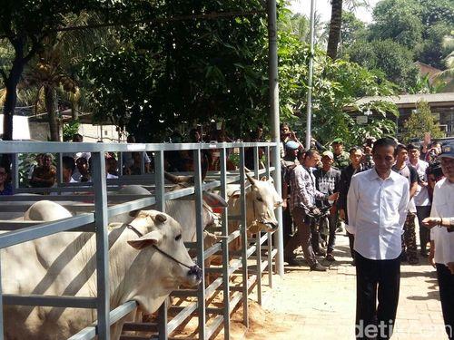 Ke Rumpin, Jokowi Saksikan Pembuntingan Sapi