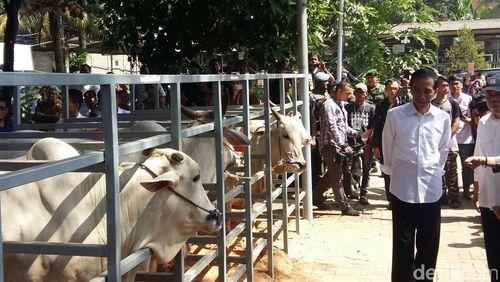 RI Impor Daging, Jokowi: Kalau Tidak Impor, Sapi Betina Disembelih