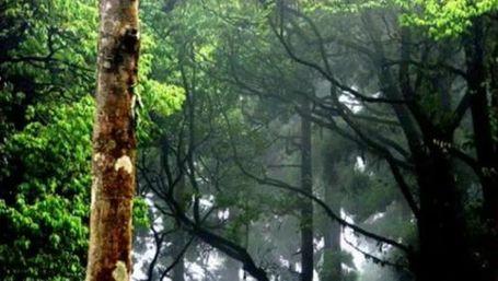 Hutan Angker di India dengan Kisah Hantu Tanpa Kepala