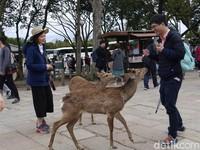 Diserbu Rusa Menggemaskan di Jepang