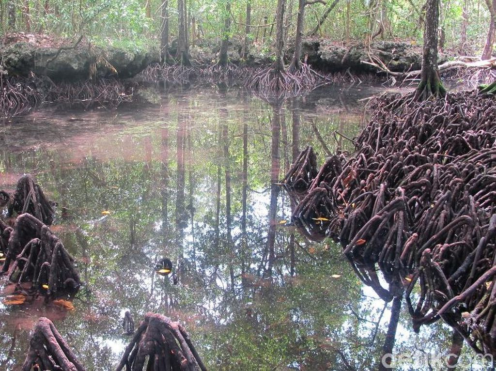 Danau Udang Merah yang Cantik & Dikeramatkan