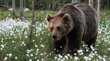 Menginap Di Hotel Dekat Sarang Beruang, Mau?