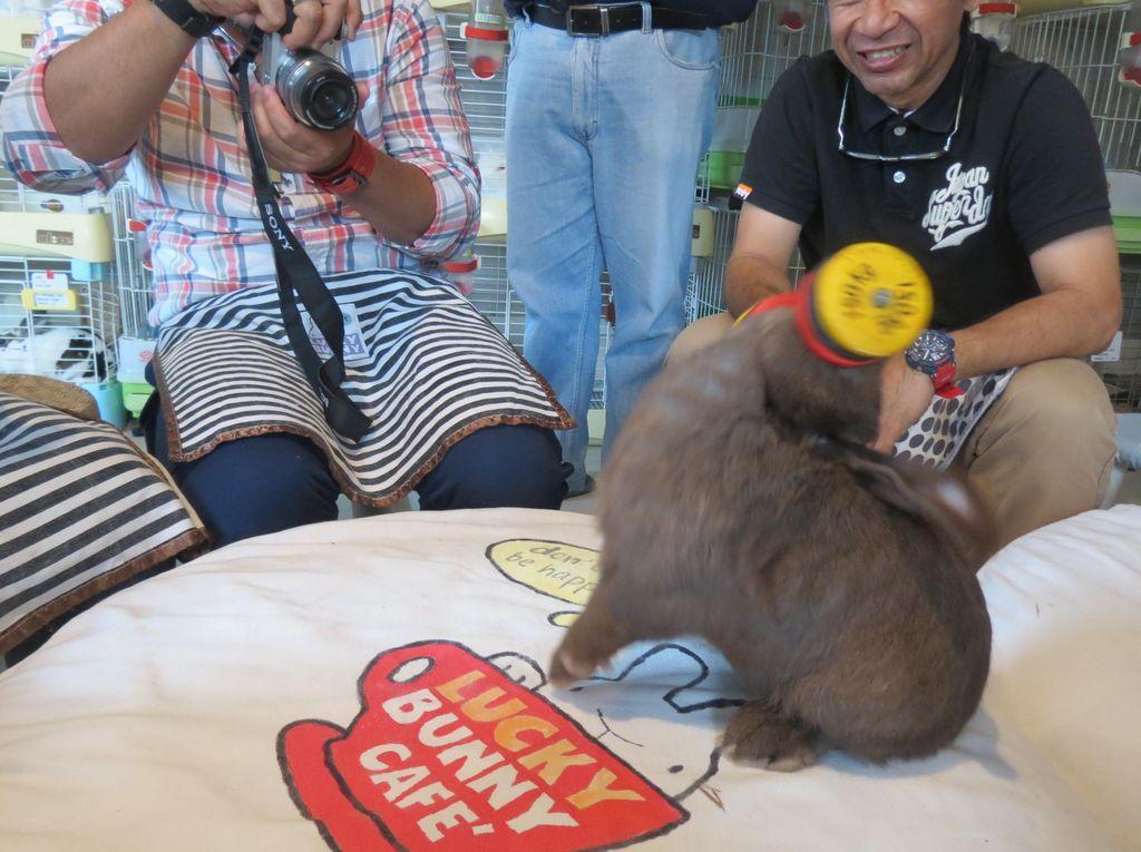 Kelinci di Thailand Bisa Angkat Barbel & Dorong Troli
