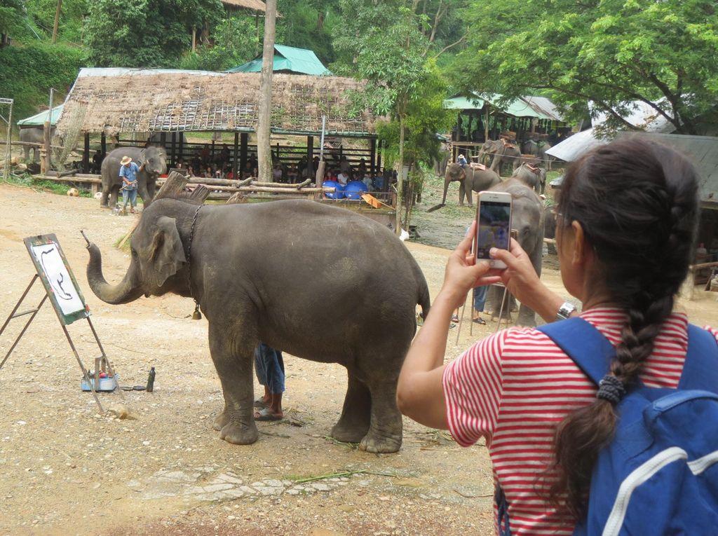 Wow! Gajah di Thailand Bisa Melukis dan Main Bola