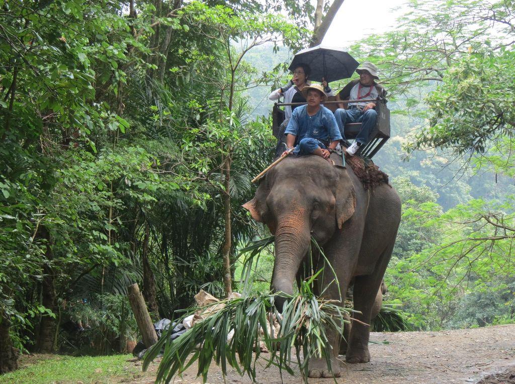 Naik Gajah di Thailand, Ini yang Terjadi Kemudian