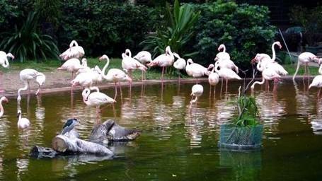 Hong Kong Punya Pertunjukkan Burung Di Tengah Kota