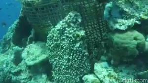 Bukan Pakai Pancing, Begini Cara Unik Tangkap Ikan di Wakatobi