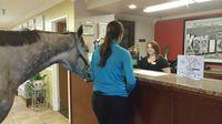Permalink to Cewek Ini Bawa Kudanya ke Kamar Hotel, Alasannya Tak Terduga