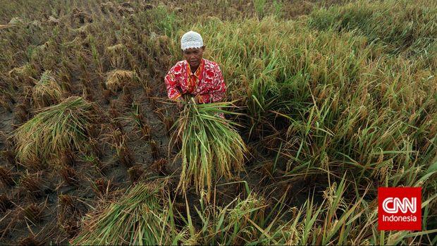 Dari 14 juta ha lahan yang seharusnya di-cover asuransi pertanian, pemerintah baru menargetkan 1 juta ha lahan.