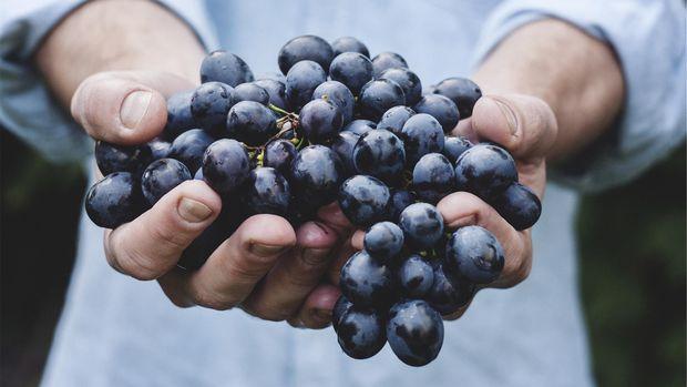 jus anggur dianggap bisa membantu menurunkan lemak dalam darah.