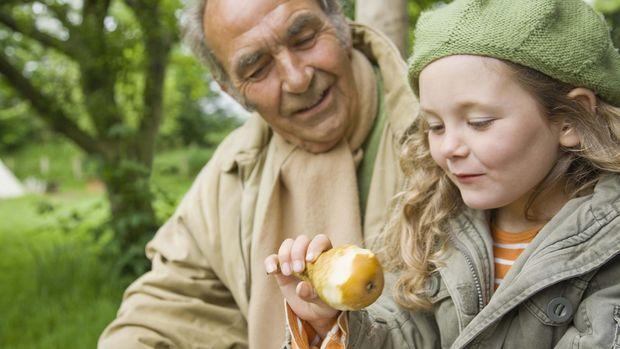 Buah pir memiliki manfaat antara lain mengandung banyak vitamin dan mengurangi risiko penyakit jantung.