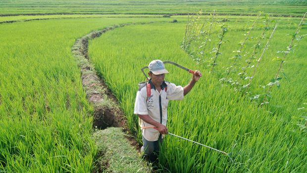 Peluang Pertanian Indonesia Di Forum Wto Zaman Now