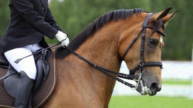 Kuda-kuda yang berasal dari luar Indonesia telah melalui proses biosecurity.