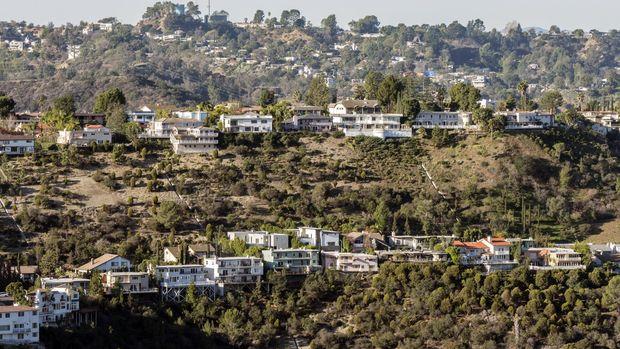 Perbukitan di California yang sekarang jadi Hollywood dahulu merupakan tanah yang dipenuhi Toyon.