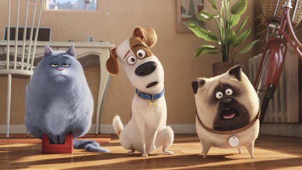 Louis C.K. mengisi suara Max (tengah) di The Secret Life of Pets.