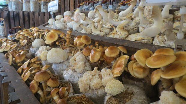 Aneka jamur yg jadi bahan makanan (Fitraya/detikTravel)