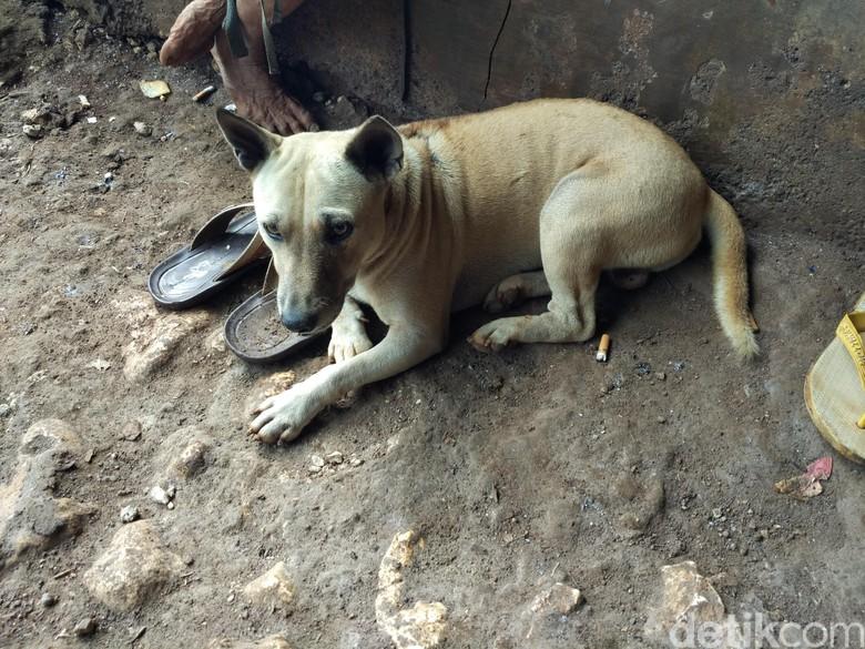 Tentang Bambang, Anjing yang Setia Temani Mbah Kijem Hidup di Gua