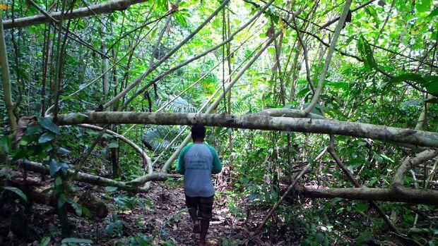 Pace Marcis membimbing masuk ke dalam hutan (Wahyu/detikTravel)
