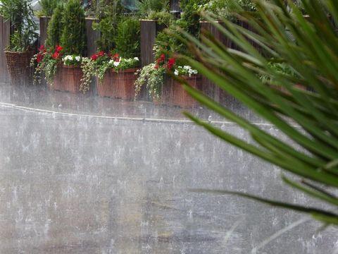 Penyakit yang rentan menyerang di musim hujan/
