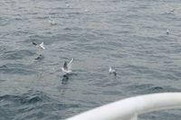 Burung-burung camar di Selat Bosphorus (Rois/detikTravel)