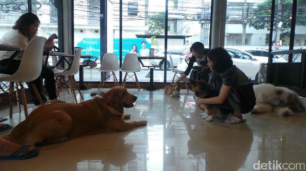 Pengunjung mampu santai sambil bermain bareng anjing lucu (Pasti/detikTravel)