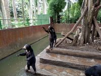 Penampakan Beruang Kurus di Kebun Binatang Bandung