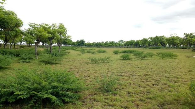 Suasana hijau nan asri di Pantai Pandanan (Ardian/detikTravel)
