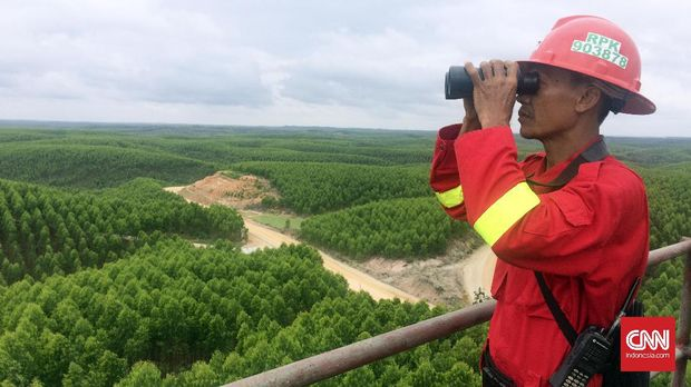 Petugas memantau titik api dari Menara Api Nursery di Hutan Tanaman Industri Sinar Mas Forestry, Riau. (CNN Indonesia/Prima Gumilang)