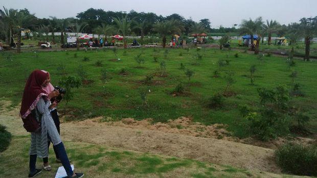 Hanya dengan Rp 5.000 traveler bisa berkeliling kebun kurma ini (Muhajir/detikTravel)