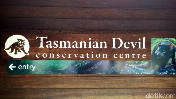 Pusat konservasi Tasmania Devil di Taronga Zoo (Wahyu/detikTravel)