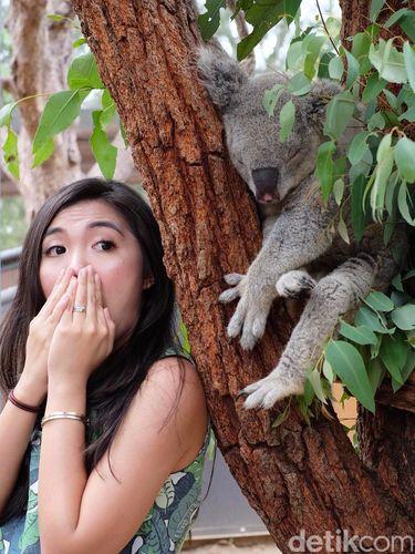 taronga5 Wisatawan dapat berfoto dengan koala ini (Arief Muhammad/Istimewa)