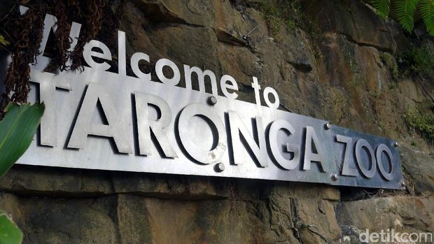 Selamat tiba di Kebun Binatang Taronga, Sydney (Wahyu/detikTravel)