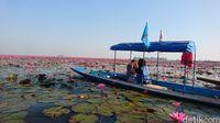 Naik perahu menyusuri danau pink (Masaul/detikTravel)
