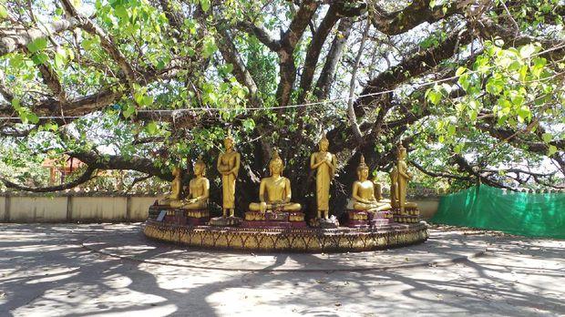 Pohon bodhi dan patung Buddha (Masaul/detikTravel)
