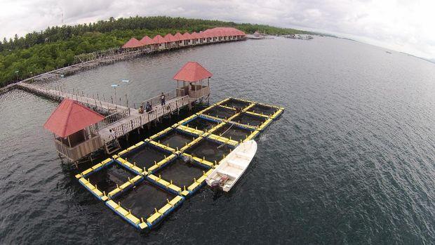 Program 'Emas Biru' Bikin Panen Nelayan Meningkat