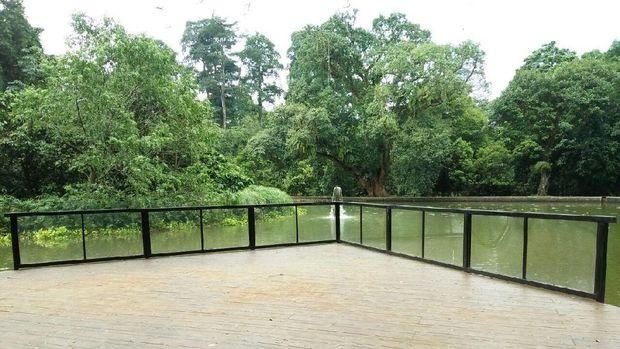 Spot instagenic di Kebun Raya Bogor, pagar kaca di samping kolam teratai (Bonauli/detikTravel)