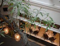 Mencicip Salad Putri Dewi dan Pisang Bakar Keju di Plataran Menteng