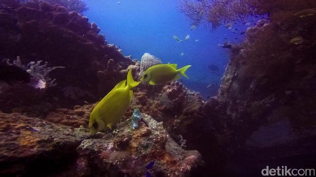 Ikan warna-warni di sekitar kapal (Kamal/detikTravel)