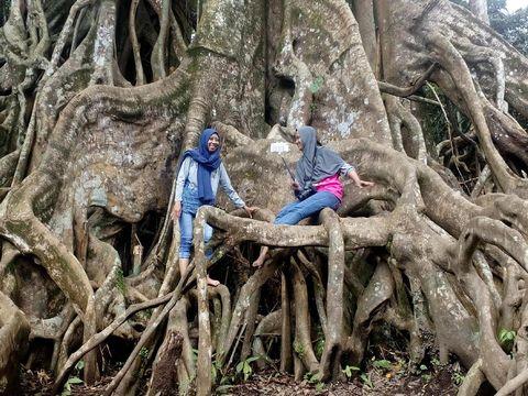 Foto di akar pohon