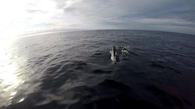 Lumba-lumba yg mendekat bikin kagum sekaligus terkejut