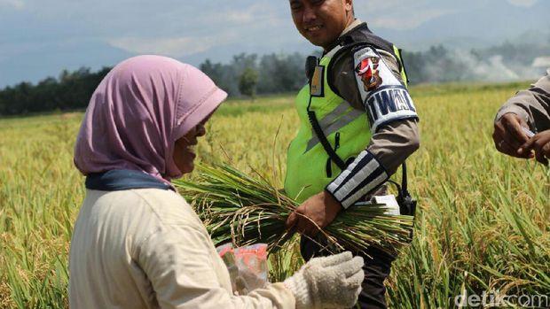 Polantas Imbau Petani di Aceh Besar Tak Bakar Jerami di Tepi Jalan