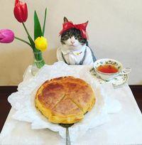 Lucunya Kucing Ini Pakai Aneka Baju Yang Disesuaikan
