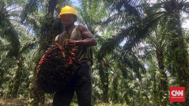 KPK Temukan 63 Ribu Wajib Pajak Industri Sawit (EMBARGO)