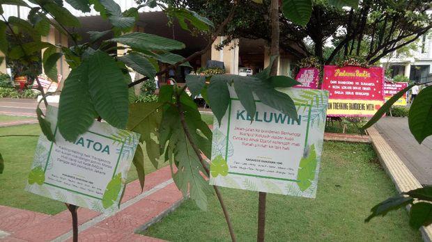 6 Pot tanaman dijejerkan di lapangan di depan Blok G Gedung Balai Kota.
